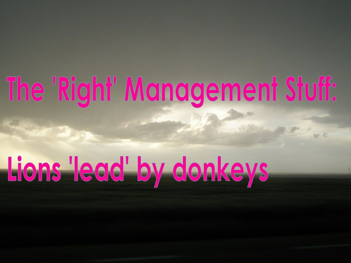 The 'Right' Management Stuff: Lions 'lead' by donkeys